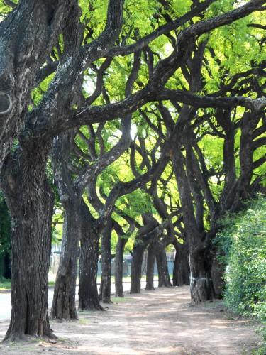 Bosques de Palermo.JPG