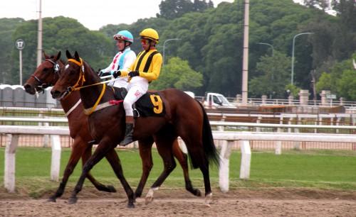 2 chevaux Hippodrome de Palermo.JPG