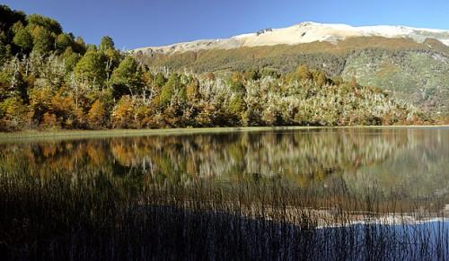bosque andio patagonico.jpg