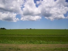 soja, argentine, soja argentin, soja transgénique, monsanto, exportations de soja, superficie cultivée, greenpeace